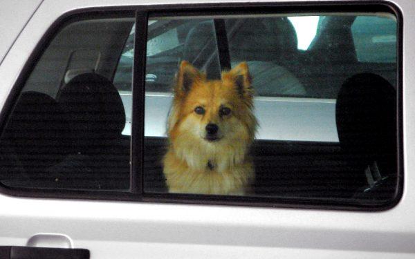 Bild: Hund im Auto